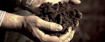 SOIL AS PRECIOUS AS GOLD
